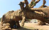 """Lộ nguồn gốc một cây """"siêu khủng"""" di chuyển trên quốc lộ 1"""