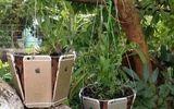 Sốc với độ chịu chơi của con nhà giàu, dùng iPhone làm chậu trồng cây