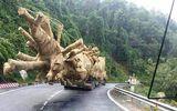 """Các cây """"quái thú"""" được vận chuyển ra Hà Nội: Có đi """"nhầm"""" vào tư dinh?"""