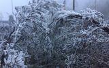Clip: Băng tuyết bất ngờ phủ trắng đỉnh Fansipan khi sắp vào hè