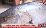Video: Quảng Nam: Ngư dân bắt được cá lạ dài hơn 1,15m