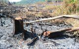 Bắt khẩn cấp Phó trạm trưởng Trạm bảo vệ rừng vì nhận hối lộ