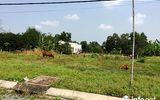 Đồng Nai rà soát, xử lý việc phân lô bán đất nền trái phép