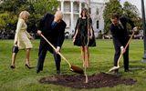 """Lý do cây sồi Tổng thống Pháp trồng tại Nhà Trắng bỗng nhiên """"mất tích"""""""