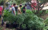 """Đột kích tụ điểm trồng gần 1.000 cây nghi cần sa, truyền đạo """"Hội thánh Đức Chúa Trời"""" trái phép"""