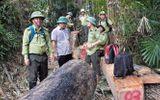 Quảng Nam: Hàng loạt cán bộ kiểm lâm xin nghỉ việc vì áp lực