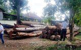"""Đắk Nông: 9 cán bộ kiểm lâm bị kỷ luật vì liên quan đến trùm gỗ lậu Phượng """"râu"""""""