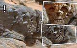 Hộp sọ hóa thạch trên sao Hỏa là bằng chứng của người ngoài hành tinh cổ đại?