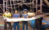 """Tin tức - Clip ngư dân bắt được cá hố """"khủng"""" dài 4 mét, nặng 80 kg gây xôn xao"""