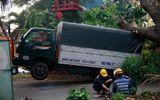 Gió lốc mạnh quét qua Sài Gòn, hàng loạt cây to gãy đổ
