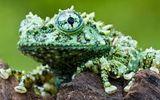 Video: Giật mình trước loài ếch dị nhất hành tinh xuất hiện ở Việt Nam