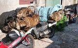 Cảnh sát hình sự chặt đứt đường dây trộm chó chuyên nghiệp, thủ sẵn hung khí để chống trả