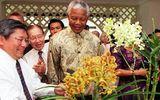"""Nghệ thuật """"ngoại giao phong lan"""" của Singapore: Loài hoa nào sẽ mang tên 2 nhà lãnh đạo Mỹ-Triều?"""