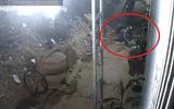 Clip: 2 thanh niên thản nhiên trộm chó bằng tay không ngay trước cửa nhà dân