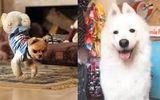 """Tin tức -  Video: Những khả năng """"đặc biệt"""" của thú cưng khiến bạn ghen tị"""