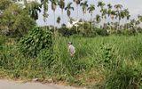 Tin tức - TP.HCM: Phát hiện thi thể người đàn ông đang phân hủy trong bãi cỏ