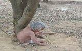 Tin tức - Thông tin bất ngờ vụ cụ ông xích vợ cởi trần vào gốc cây