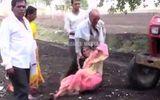 """Video: Phẫn nộ người đàn ông đẩy mẹ già làm """"lá chắn sống"""" trước máy cày"""