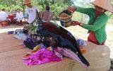 Cá voi dài gần 3m trôi dạt vào bờ biển Quảng Nam