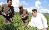 Ông Kim Jong-un đi thăm trang trại khoai tây