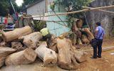 """Thông tin bất ngờ về """"kho"""" gỗ được tìm thấy trong nhà trùm ma túy Nguyễn Thanh Tuân"""