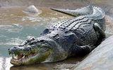 Video: Những con cá sấu khổng lồ lớn nhất thế giới bị bắt giữ