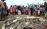 Tin thế giới - Indonesia: Dân làng tàn sát gần 300 con cá sấu sau cái chết của người đàn ông xấu số