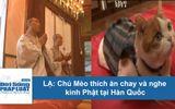"""Video chú mèo """"kỳ lạ"""" thích ăn chay và nghe kinh Phật tại Hàn Quốc"""