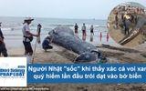 """Người Nhật """"sốc"""" khi thấy xác cá voi xanh quý hiếm lần đầu trôi dạt vào bờ biển"""