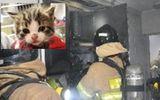 """Chân dung """"siêu mèo phóng hỏa"""" đốt căn hộ, khiến 22 người phải sơ tán"""