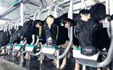 Vinamilk tiên phong giới thiệu sữa tươi 100% A2 đầu tiền tại Việt Nam