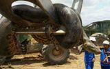Tin tức - Cận cảnh con trăn lớn nhất thế giới: Nặng gần nửa tấn, vòng bụng 1m