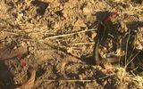 Tin tức - Video: Nhím tấn công rắn hổ mang cứu thằn lằn thoát chết trong gang tấc