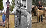 Tin tức - Clip: 10 giống chó lớn nhất thế giới được các đại gia săn lùng