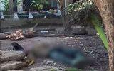 Tin tức - Trèo cây hái cau, ông cụ U60 ngã tử vong