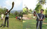 """Video: Rùng mình xem những con rắn hổ mang chúa """"khổng lồ"""" trên thế giới"""