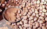 Phát hiện mánh khóe biến khoai tây Trung Quốc thành khoai tây Đà Lạt