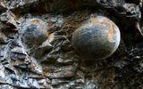 """Kỳ lạ: Vách đá biết """"đẻ trứng"""" ở Trung Quốc"""