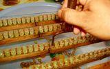"""Quy trình khai thác sữa ong chúa """"chuẩn"""" nhất của Ong Tam Đảo"""