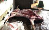Bắt quả tang lò mổ mua heo chết về xẻ thịt bán
