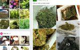 """Tiếp cận """"sàn giao dịch cần sa xuyên quốc tế"""" chuyên cung ứng hạt, cây giống ma túy"""