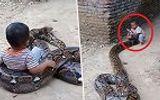 Video: Rợn người cảnh bé trai 2 tuổi cưỡi trăn khổng lồ
