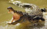 Tin thế giới - Choáng váng khi cụ bà săn được cá sấu nặng 3 tạ trong nháy mắt