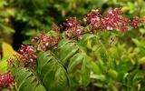 Sức khoẻ - Làm đẹp - Những bài thuốc chữa viêm da cơ địa từ thiên nhiên