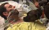 Tin thế giới - Video: Khoảnh khắc chia ly đầy cảm động của chú chó với người chủ đang hấp hối