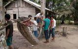 """Tin thế giới - Video: Những vụ trăn khổng lồ """"đột nhập"""" vào nhà khiến người dân kinh hãi"""