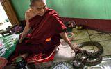 """Tin tức - Video: Vuốt ve trăn """"khủng"""" để cầu may ở Myanmar"""