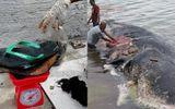 Video: Cá nhà táng chết thảm vì nuốt phải 6kg rác thải chứa dép tông, cốc nhựa, túi nilon