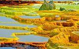 """""""Cánh đồng vàng"""" có vẻ đẹp kỳ lạ nhưng cũng """"bốc mùi"""" nhất hành tinh"""
