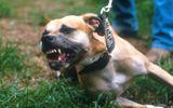 Bị chó Pitbull thả rông điên cuồng tấn công, kéo lê nhiều mét khi ra hồ tập thể dục